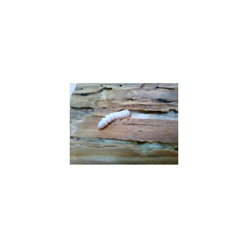 Traitement Curatif et Préventif pour Bois Wood Bliss Galtane contre les parasites du bois et champignons